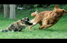 Funny Animal Videos 2014