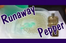 Easy Kids Science Experiments Run Away Pepper