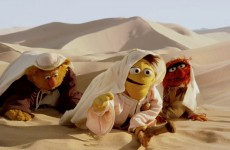 We Just Don't Noah – Muppets Most Wanted