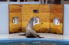 Clever Sea Lion Identifies Numbers and Letters! – Part 2 – Extraordinary Animals – Earth