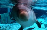 Dolphin Expresses Emotion Through Sound – Extraordinary Animals – Earth