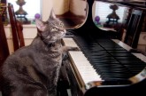 Nora the piano playing cat – Extraordinary Animals – Series 2 – Earth