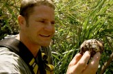 Saltwater crocodile protects her nest – Deadly 60 – BBC