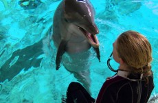 Super Smart Dolphin Answers Questions – Extraordinary Animals – Earth