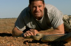 The most venomous snake on earth! – Deadly 60 – BBC