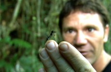 World's Biggest Ant! – Bullet Ant – Deadly 60 – Series 2 – BBC