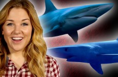 10 Reasons Why Sharks Are Awesome! – Shark Week Special – Earth Unplugged