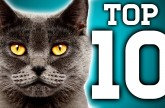 Awesome! 10 Cat Facts You Need to Know – Earth Unplugged