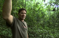 How to find a chimpanzee colony – Deadly 60