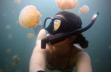 GoPro: Lost in Jellyfish Lake