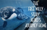 The Free Willy Story:Keiko's Journey Home
