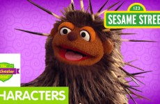 Furchester Hotel: Meet Pierce, the Porcupine
