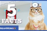 5 Cat Facts That Will Make You Purr | 5 FACTS
