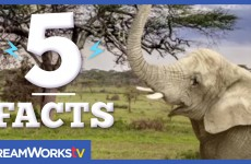 5 Facts about Elephants That Will Blow Your Mind! | 5 FACTS