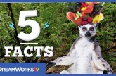 5 Lemur Facts that Will Make You Move it! Move it! | 5 FACTS