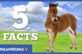 5 Little Pony Facts | 5 FACTS