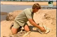 Crocodile Hunter – Wild River of Africa