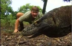 The crocodile hunter – Steve and the dragon