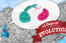Can Evolution Create Information? – 12 Days of Evolution #9