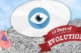 Can Evolution Make an Eye? – 12 Days of Evolution #4