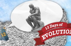 Does Evolution Have a Point? 12 Days of Evolution #12