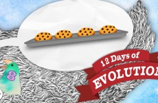 Does Evolution Violate the 2nd Law of Thermodynamics? – 12 Days of Evolution #8
