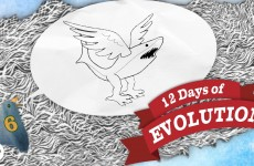 Evolution Is Dumb – 12 Days of Evolution #6