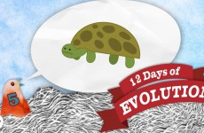 Have We Ever Seen A New Species Arise? – 12 Days of Evolution #5