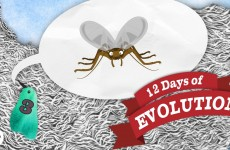 Have We Ever Seen Evolution Happen? – 12 Days of Evolution #3