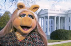 Miss Piggy Goes To Washington | The Muppets