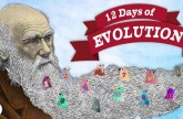 The 12 Days of Evolution – Complete Series!