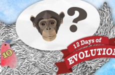 Why Are There Still Monkeys? – 12 Days of Evolution #10